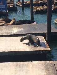 Don't worry lonely sea lion, your friends will show up soon!