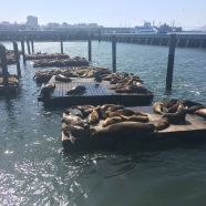 Sea lions galore!